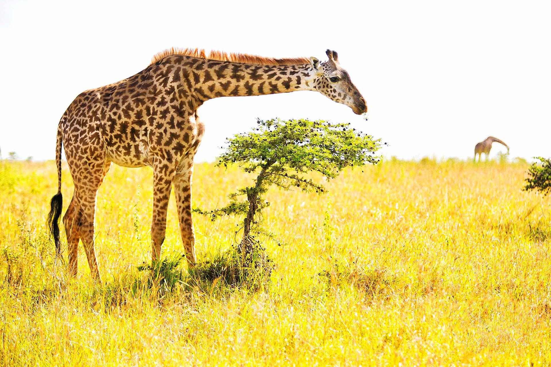 african safari wedding photos