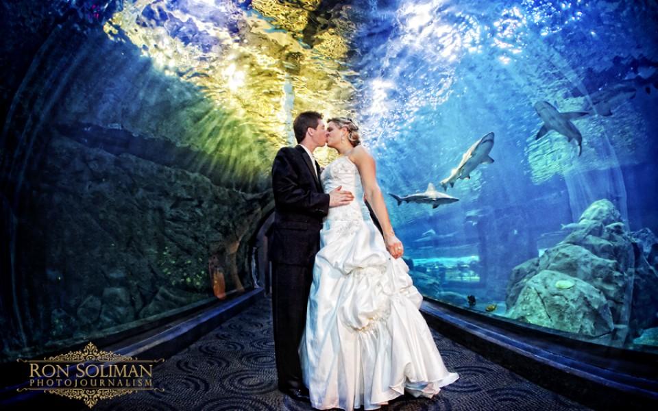 Adventure Aquarium Wedding Kelly And Tim Camden New
