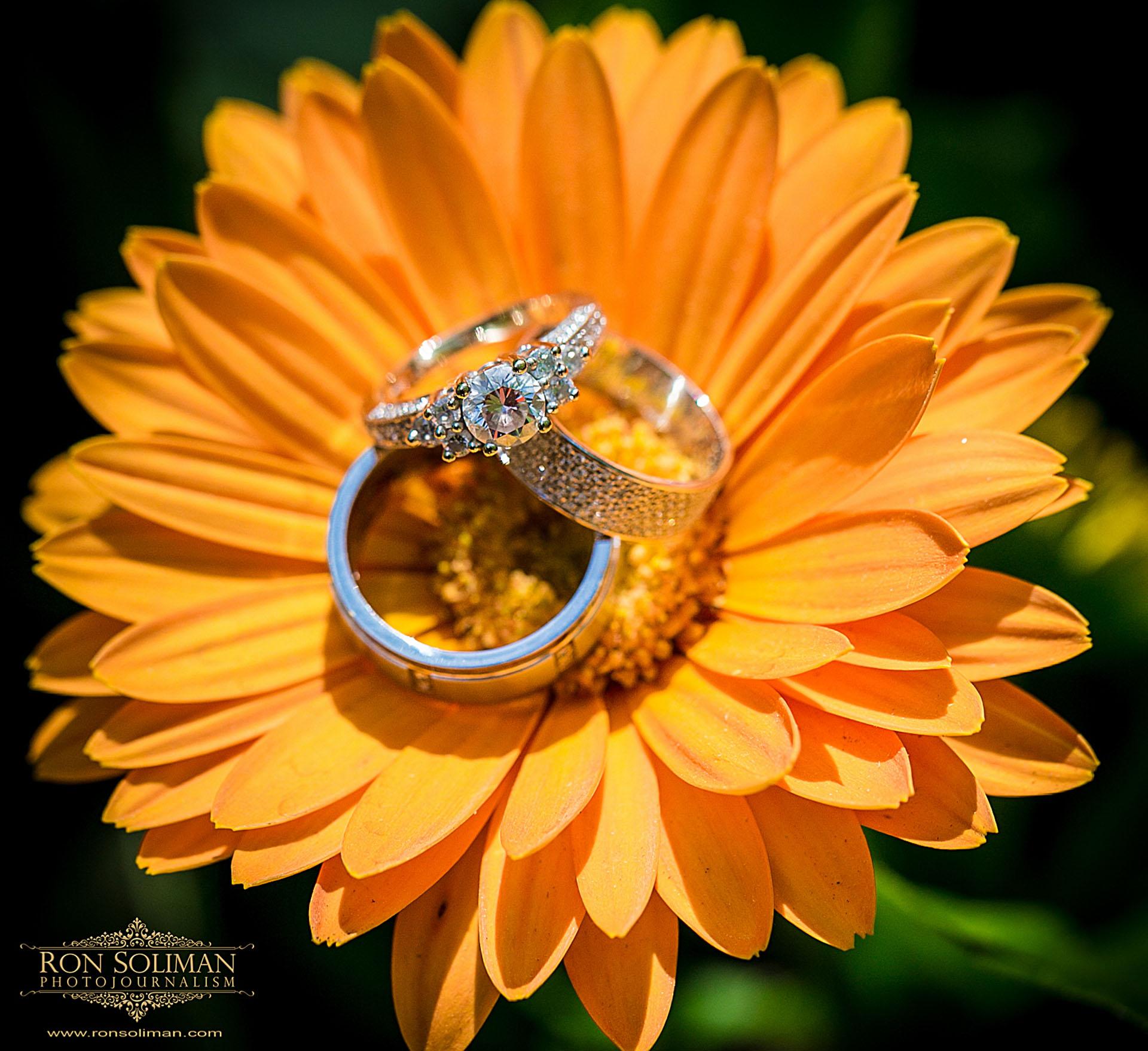 wedding rings on sunflower