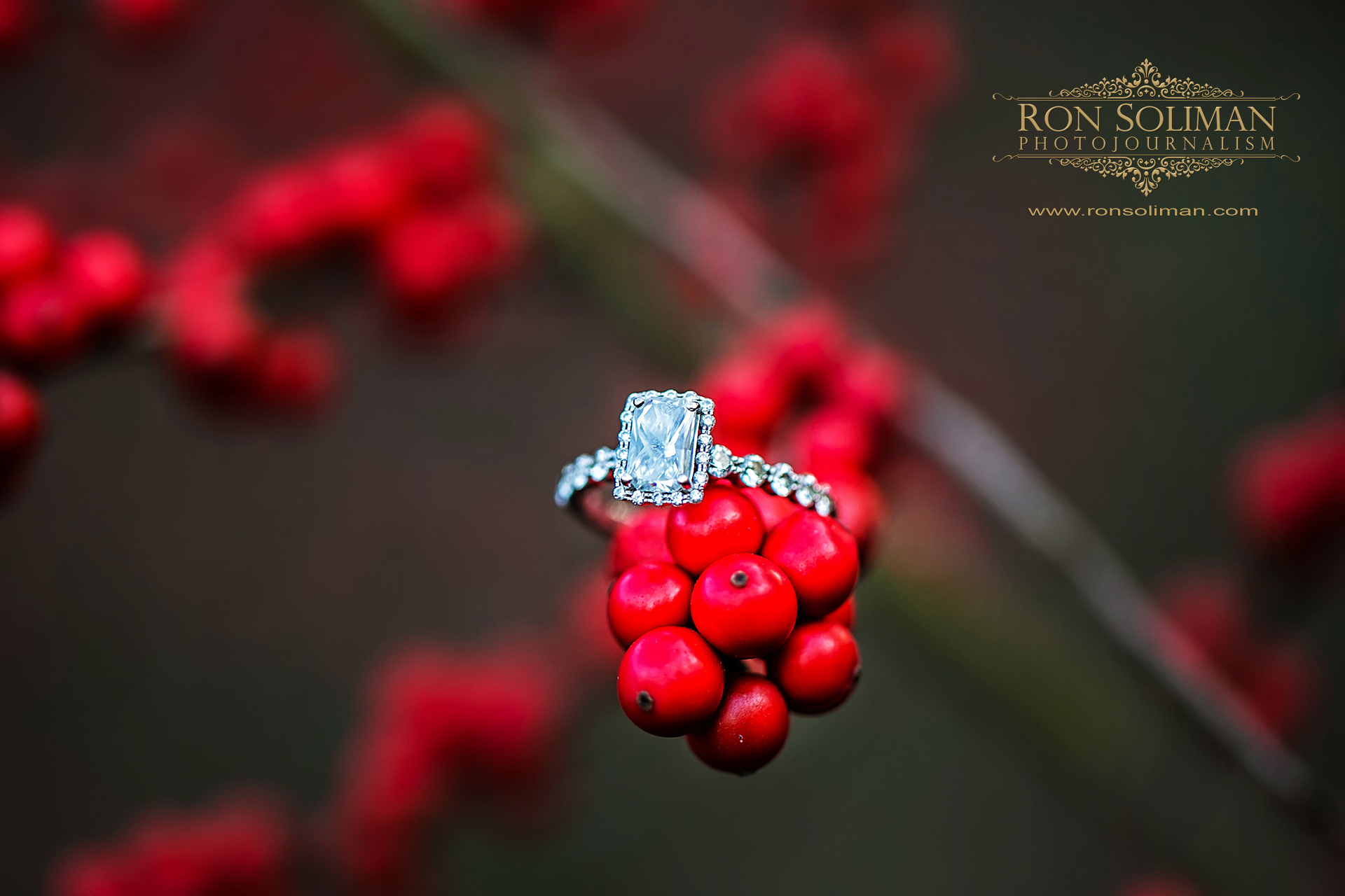 LONGWOOD GARDENS ENGAGEMENT 22