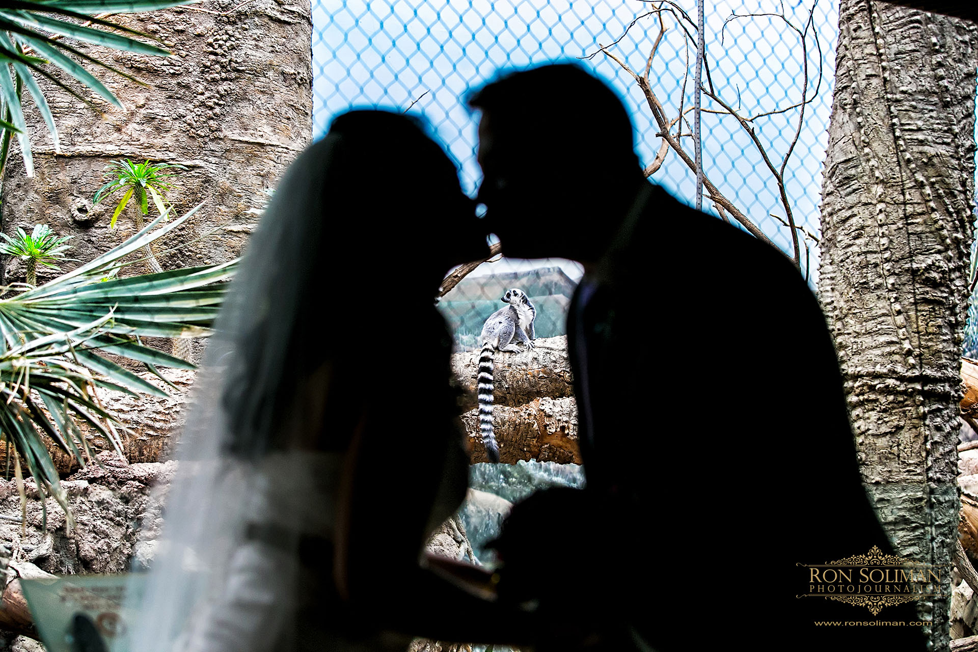 bronx zoo wedding 16