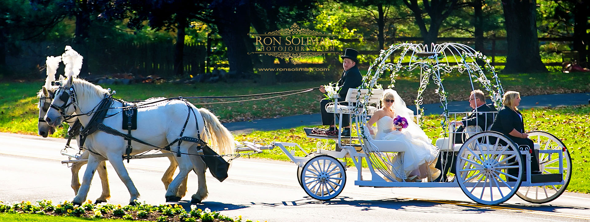 cinderella horse carriage for weddings