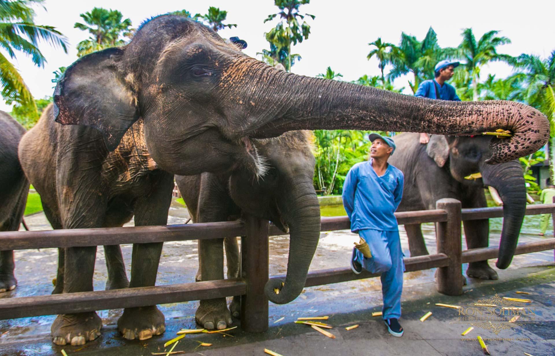 BALI INDONESIA 19