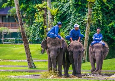 Elephant Safari Bali Indonesia