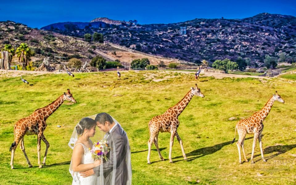 San Diego Zoo Safari Park Wedding | Jessica + Jan - New York
