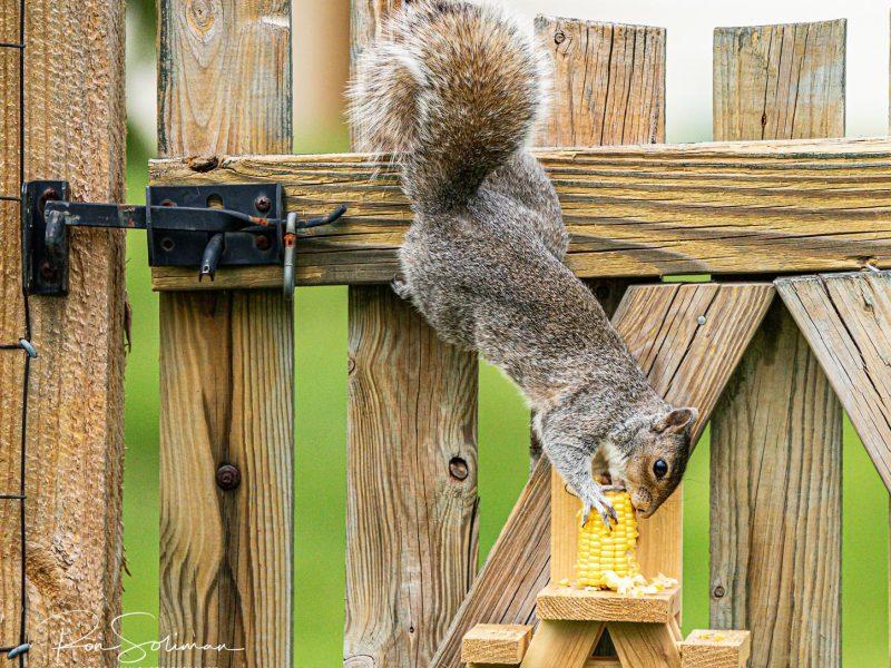 Squirrels on Quarantined